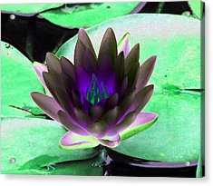 Acrylic Print featuring the photograph The Water Lilies Collection - Photopower 1116 by Pamela Critchlow