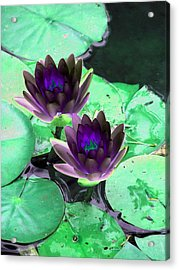 Acrylic Print featuring the photograph The Water Lilies Collection - Photopower 1119 by Pamela Critchlow