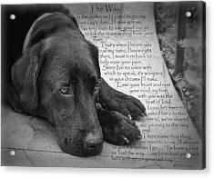 The Way Black Lab Acrylic Print