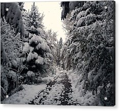 Acrylic Print featuring the photograph The Way In Snow by Felicia Tica