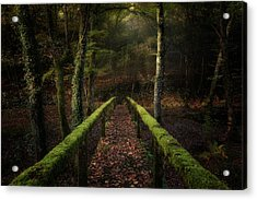 The Way To The Forest Acrylic Print