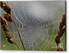 The Web Acrylic Print by Kerri Farley