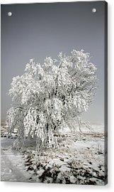 The Weight Of Winter Acrylic Print by John Haldane