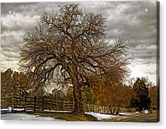 The Welcome Tree Acrylic Print