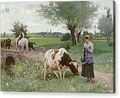 The Well Kept Cow Acrylic Print by Edouard Debat-Ponsan