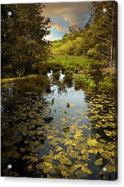 The Wetlands Acrylic Print