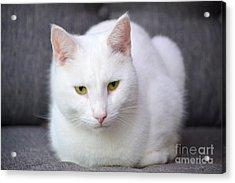 The White Beauty Acrylic Print