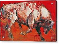 The White Bull Acrylic Print by Mark Adlington