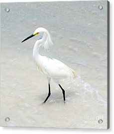 The Poser Acrylic Print by Margie Amberge