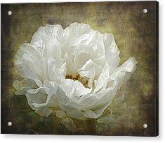 The White Peony Acrylic Print by Barbara Orenya