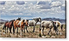 The Wild Band Acrylic Print