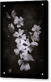 Acrylic Print featuring the photograph The Wild Roses by Louise Kumpf