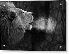 The Will Of The King Acrylic Print by Larry Bohlin