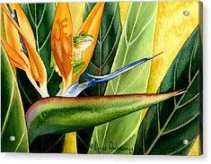 The Windsurfer Acrylic Print by Lyse Anthony