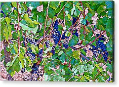 The Wine Maker I Acrylic Print by Ken Evans