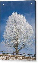 The Winter Sentry Acrylic Print