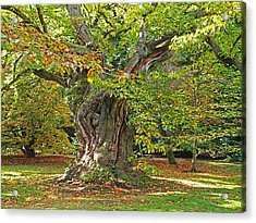 The Wise Old Tree Acrylic Print
