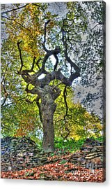 The Witches Tree Acrylic Print
