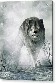 The Wolf Of Winter Acrylic Print