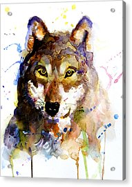 The Wolf Acrylic Print by Steven Ponsford