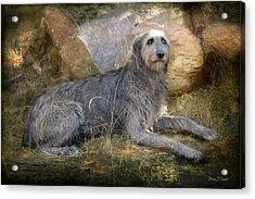 The Wolfhound  Acrylic Print by Fran J Scott