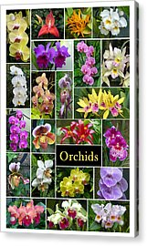 Acrylic Print featuring the photograph The Wonderful World Of Orchids by Cindy McDaniel