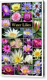 Acrylic Print featuring the photograph The Wonderful World Of Water Lilies by Cindy McDaniel