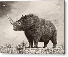 The Woolly Rhinoceros Is An Extinct Acrylic Print