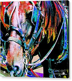 The Working Horse Acrylic Print by Annie Zeno