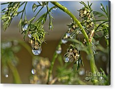The World In A Drop Of Water Acrylic Print by Peggy Hughes