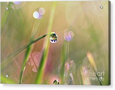 The World In A Drop Acrylic Print by Sylvia Cook