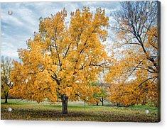 The Yellow Tree Acrylic Print