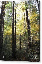 The Yellow Wood Acrylic Print by Melissa Stoudt