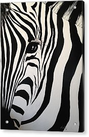 Acrylic Print featuring the painting The Zebra With One Eye by Alan Lakin