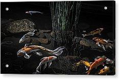 The Zen Of Koi Acrylic Print by Glenn DiPaola