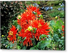 Theatre Garden Acrylic Print by Christopher Bage
