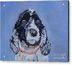 Theo Acrylic Print