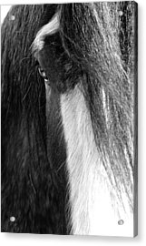 Theoden In Bw Acrylic Print