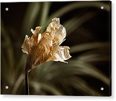 There Is Beauty In Death Acrylic Print by Carol Hyman