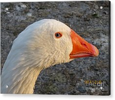 There Is Seing Me Acrylic Print