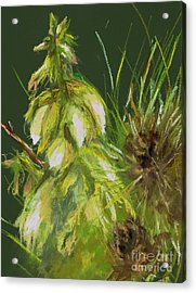 Theres A Yucca In My Yard Acrylic Print by Frances Marino