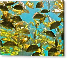 Theres Plenty Of Fish In The Sea Acrylic Print by Amanda Just