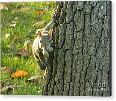 These Nuts Are All Mine Acrylic Print