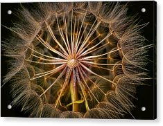 These Pods Light Up Just Dandy. Acrylic Print