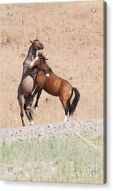 Acrylic Print featuring the photograph They Ain't Dancin' by Vinnie Oakes