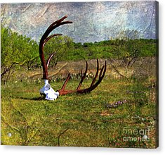 They Grow Them Big In Texas Acrylic Print by Linda Cox