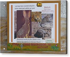 They Need Protection To Survive Acrylic Print by Mary Ann  Leitch