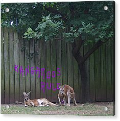 They Will Never Think It Was Us.. Acrylic Print by Nina Fosdick