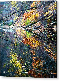 They Wink At Me Acrylic Print by Tom Cameron