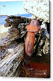 Things That Make You Go Hmm Acrylic Print by Ed Weidman